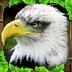 模拟猎鹰安卓版、模拟猎鹰ios版